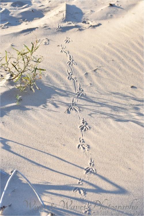 Bird tracks on the beach