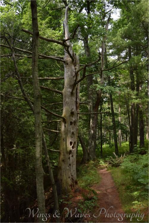 Dead tree trail