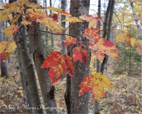 Autumn Dapple