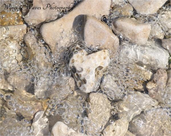 Petoskey Stone Water
